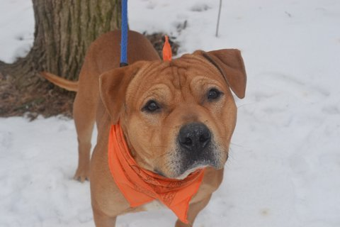 Handsome and rugged Alexander is looking for a new home of his own. He sometimes takes a little bit of time to warm up to new