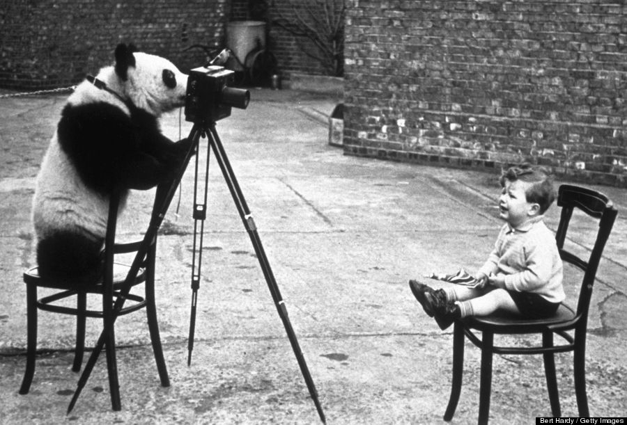 Photographer Bert Hardy's son, Mike Hardy, being photographed by Ming the panda at London Zoo in 1939.