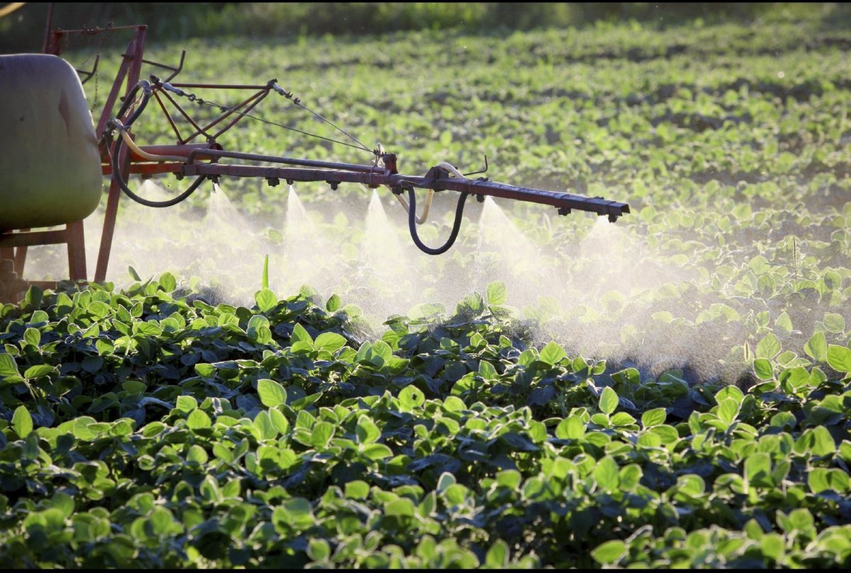 Despite claims from the likes of Monsanto and the biotech industry that GE crops are an environmental panacea and will feed t