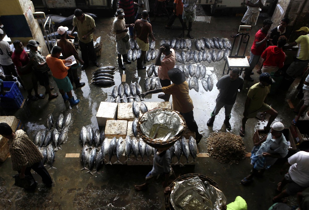 Fish are displayed for sale at a market in Colombo, Sri Lanka, Wednesday, Feb. 3, 2010. (Rafiq Maqbool/AP)