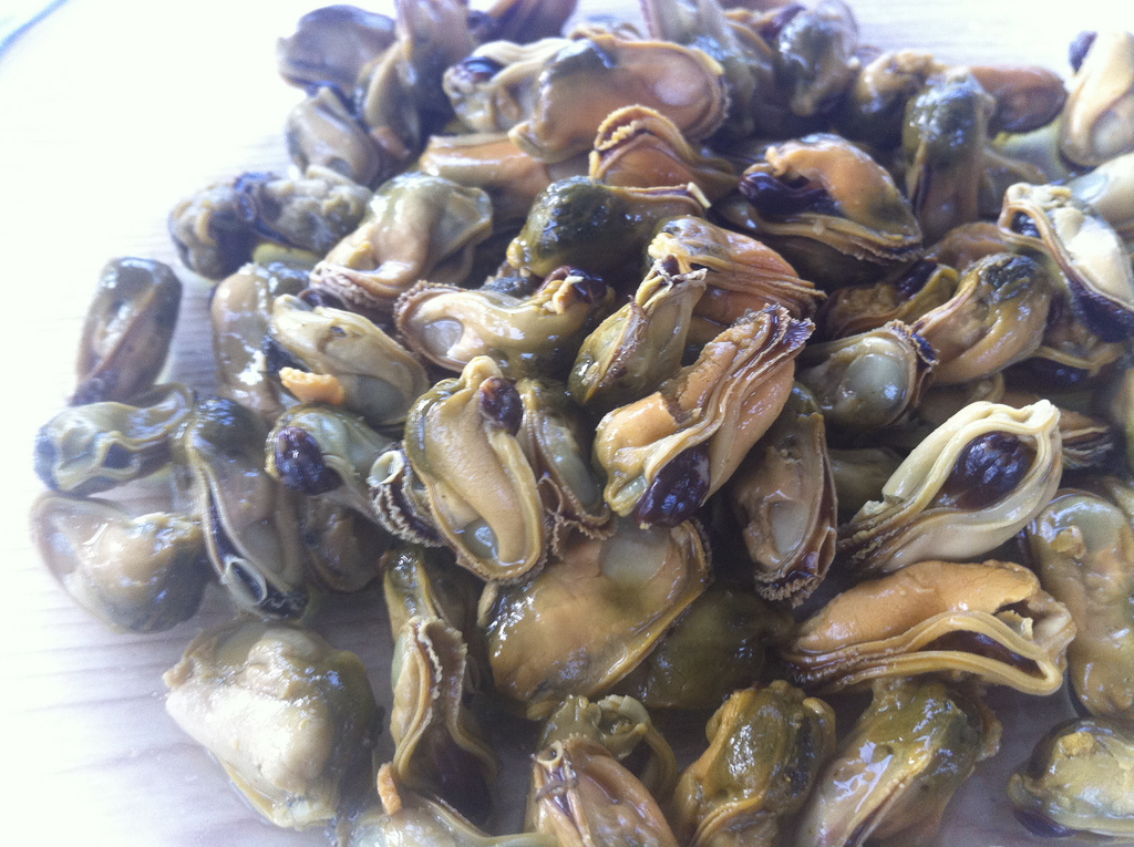 You should all know what the inside of a mussel looks like because we eat them directly out of the shell, but we thought you