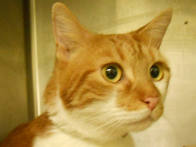 Louie's previous owner, who surrendered him because he was moving, said Louie has been living in a home with kids and a dog,