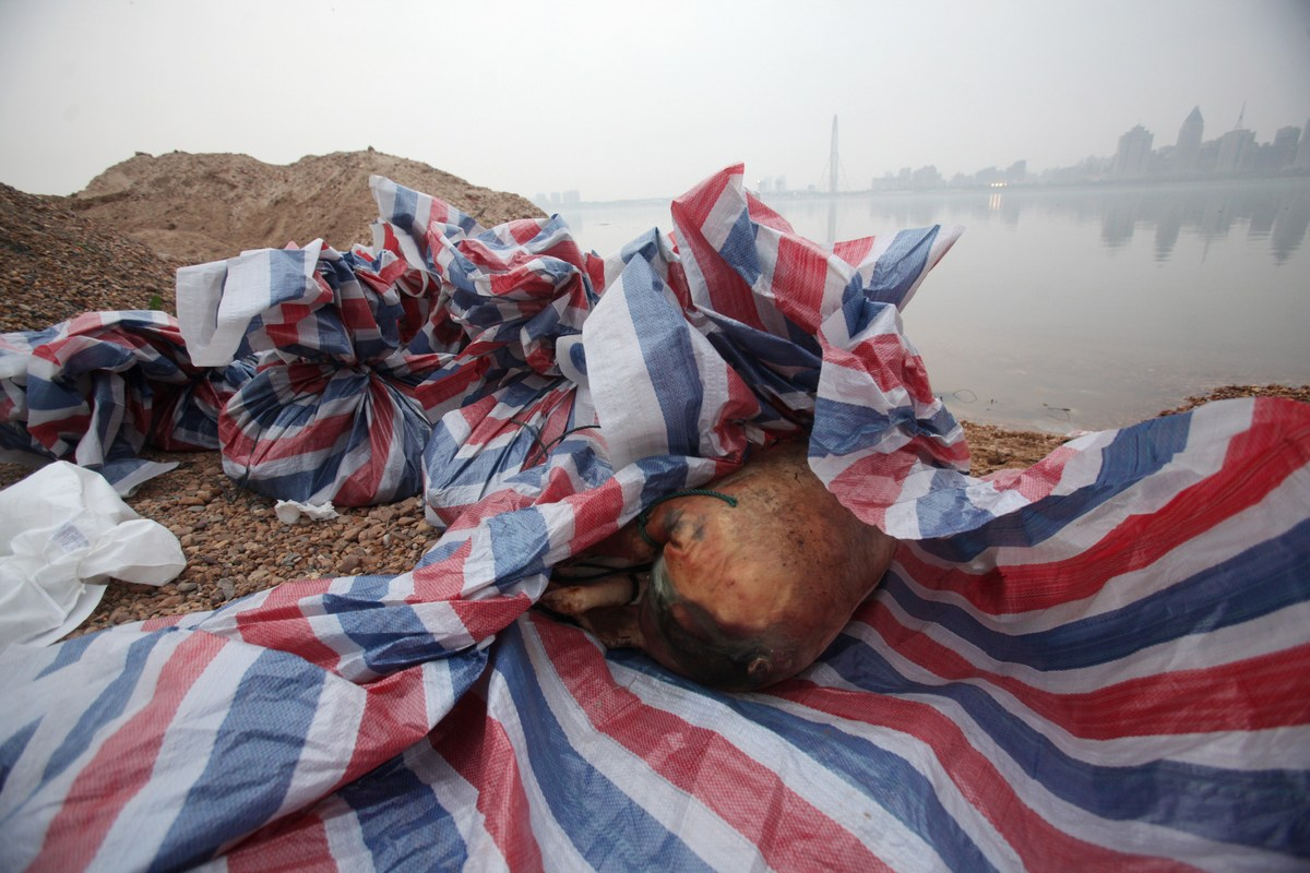 This picture taken on March 18, 2014 shows a dead pig wrapped in plastic sheets on the bank of the Gan river in Nanchang, in