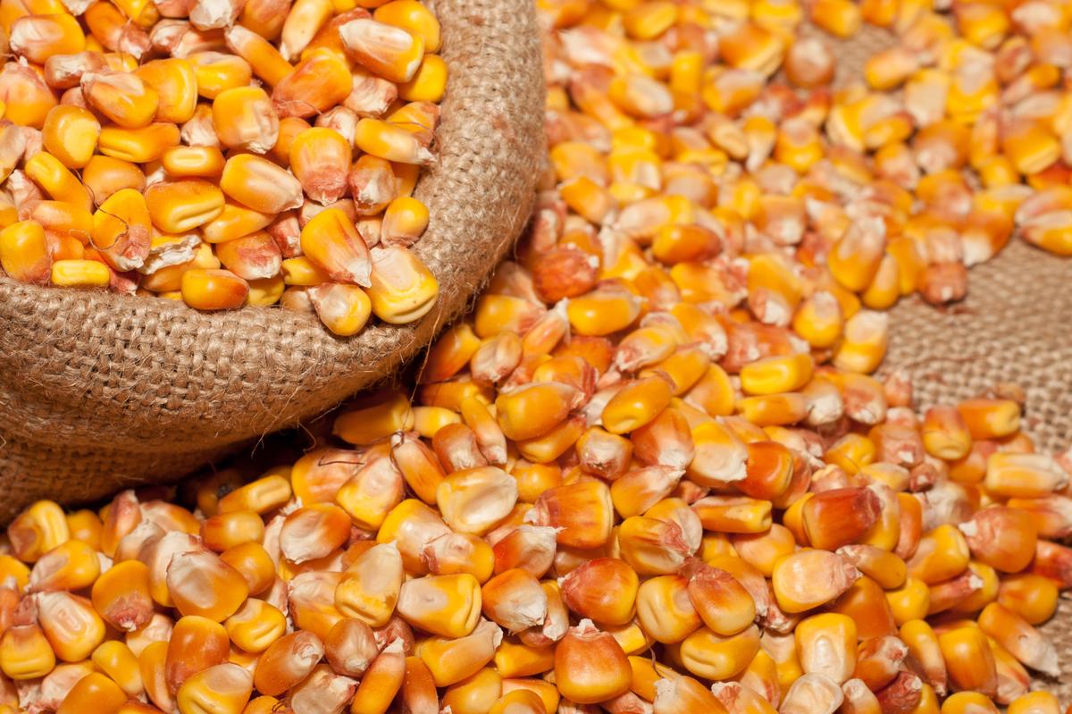 "In 2011, <a href=""http://www.epa.gov/oecaagct/ag101/cropmajor.html"" target=""_blank"">84 million acres of corn were harvested i"