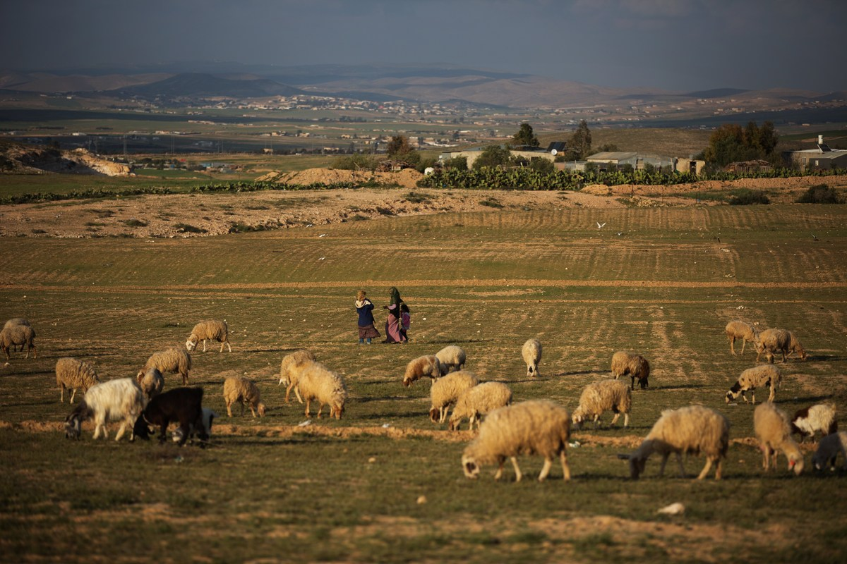 Israeli Bedouins walk next to their sheep near rally commemorating Land Day on March 30, 2014 in the Abu Quedar village, curr