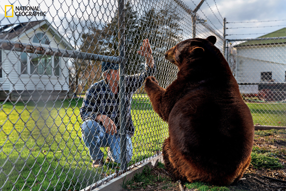"""John Matus bought Boo Boo impulsively as a cub. Last summer the Ohio man gave her to a wildlife sanctuary. """"She needs to be w"""