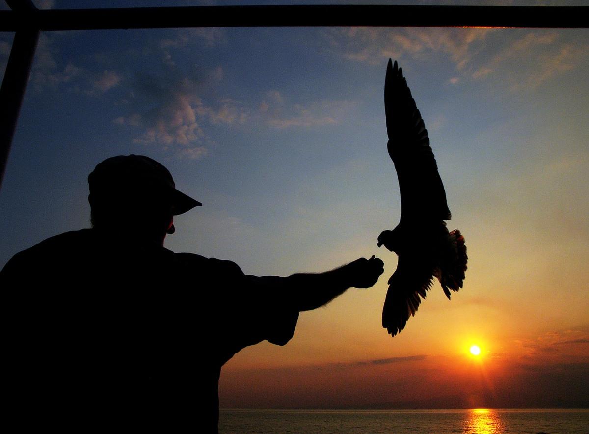 A man feeds a sea gull on a ferry between Keramoti, near Kavala city, and Thassos island, Greece, Aug. 20, 2009. (Petros Kara