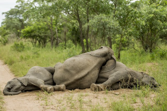 Oh, so you're a rag-tag group of drunk elephants who wake up somewhere completely random in the Singita Kruger National Park.