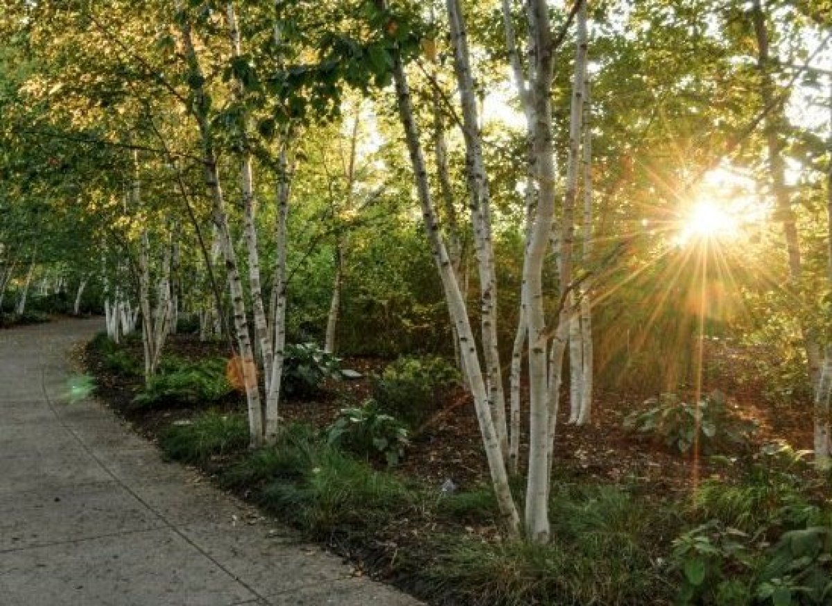 Perhaps one of the most affordable attractions on our list, Olbrich's outdoor gardens are free and open daily and access to t