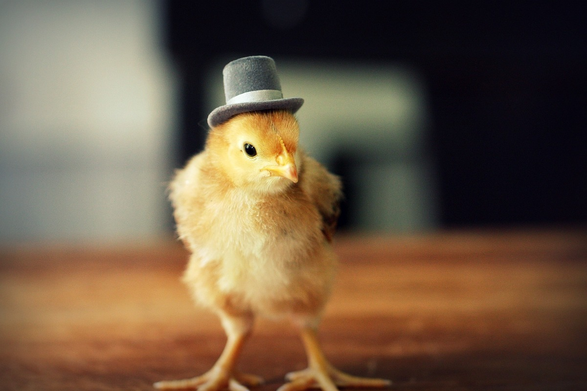 Little Baby Birds Flaunt Fancy Hats With The Utmost