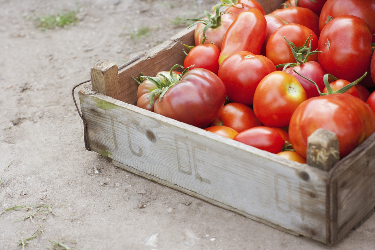 """Tomatoes will lose all their flavor in the fridge. What's a bigger crime than that? The cold air in the fridge <a href=""""http:"""