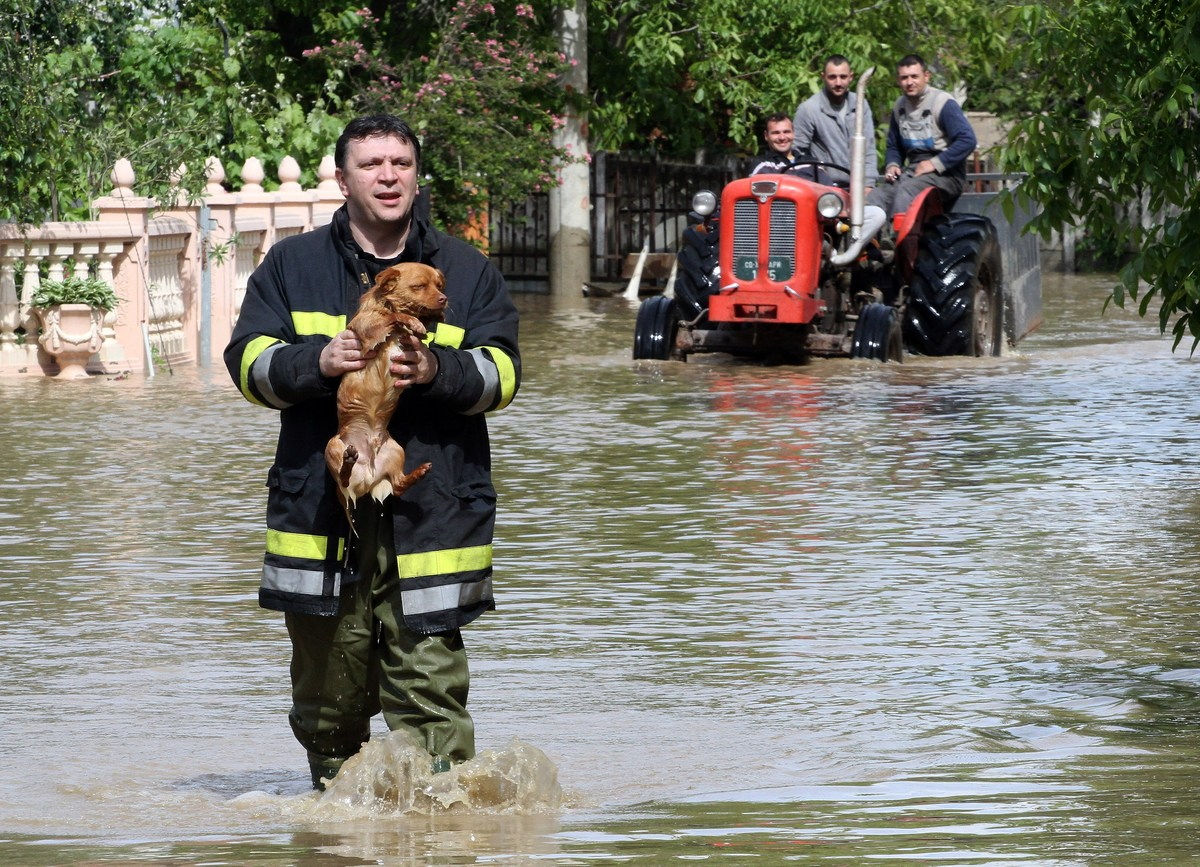 A Serbian rescuer carries a dog through  flooded street in the village of Obrez, near the central Serbian town of Varvarin, s