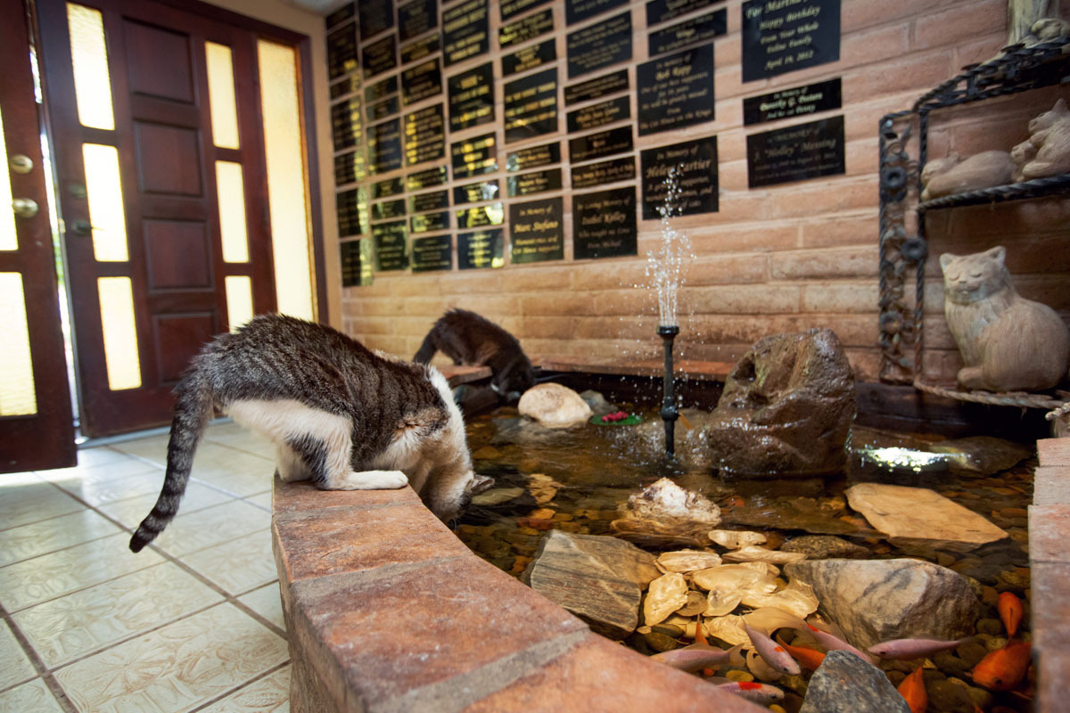 cat stress urinary problems