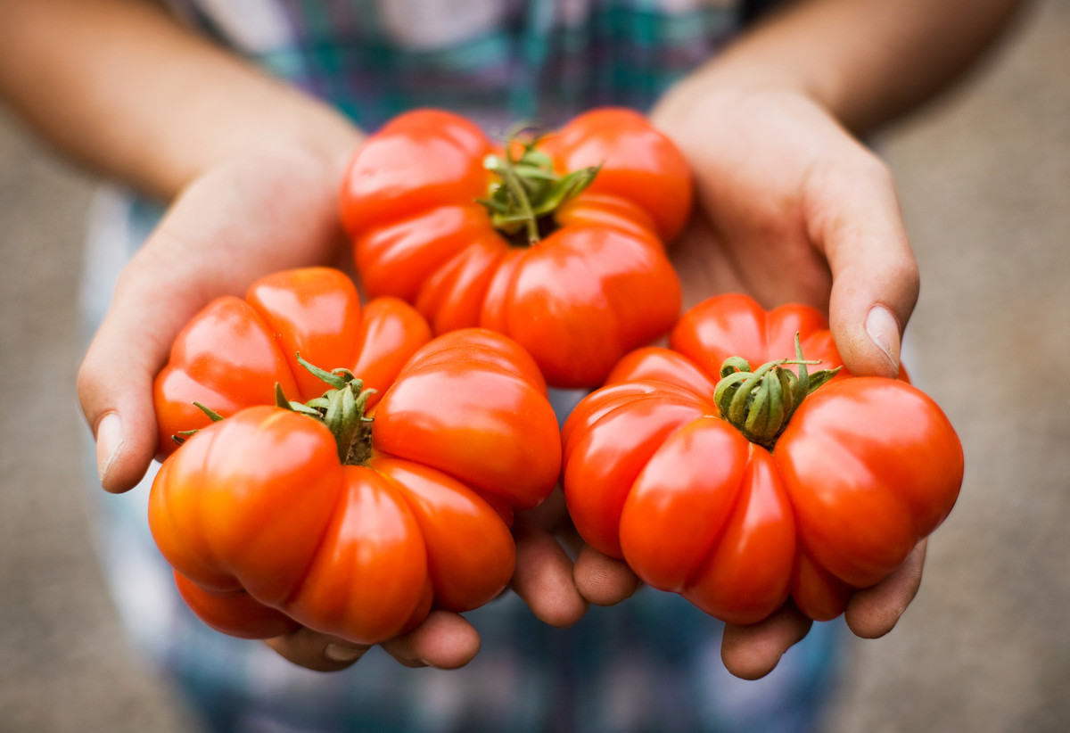 Aside from letting unripe tomatoes mature on a sunny windowsill, there's another thing you can do to ensure they'll be at the