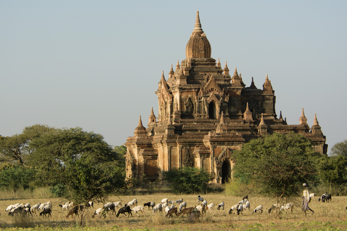 A shepherd leads his herd along temples of the Bagan archaeological site, Myanmar. (Thierry Falise/LightRocket via Getty Imag