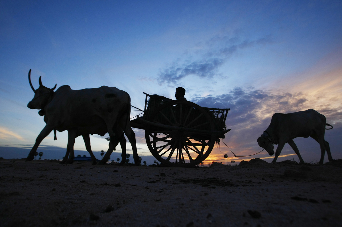 A Cambodian farmer on an ox-cart heads to a rice field for work at Krang Tnung village on the outskirt of Phnom Penh, Cambodia, early Wednesday, Aug. 21, 2013. (Heng Sinith/AP)