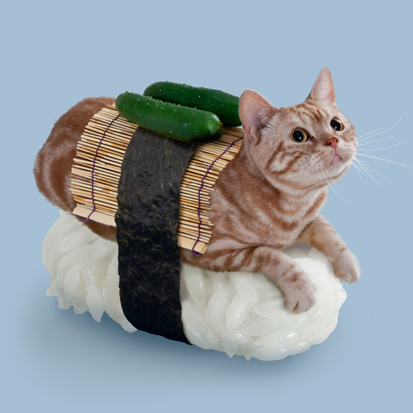 A third-generation Sushi Cat who is always fast to fight.