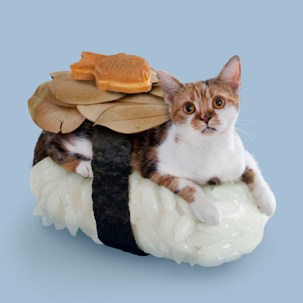 Cold and abandoned, he wanders the Sushi Cat world alone, and he's greedy when it comes to food.
