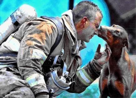 """""""This firefighter <a href=""""http://imgur.com/gallery/Gub3v"""">saved this dog</a> from her burning home."""" (Via Imgur)"""