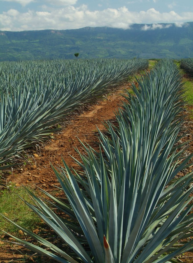 Raise Your Glass for National Tequila Day