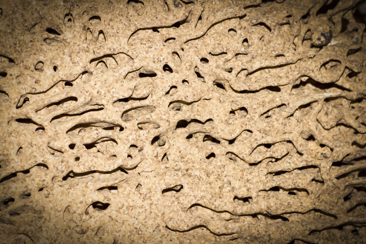 <strong>Why It's a Threat: </strong>  It sounds like something out of a movie, but a colony of termites can cause serious dam