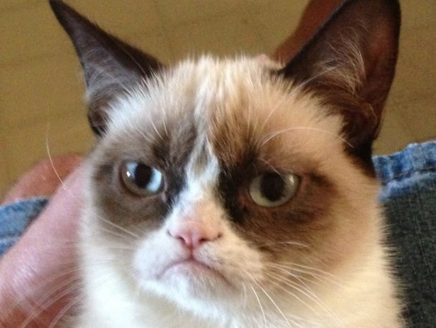 """<a href=""""http://static2.businessinsider.com/image/511d104a69bedd1f7c000012/grumpy-cat-still-hates-everyone-at-south-by-southw"""