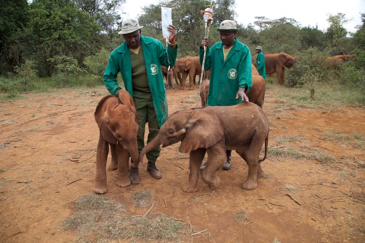 This year the charity has already rescued six orphaned elephants.