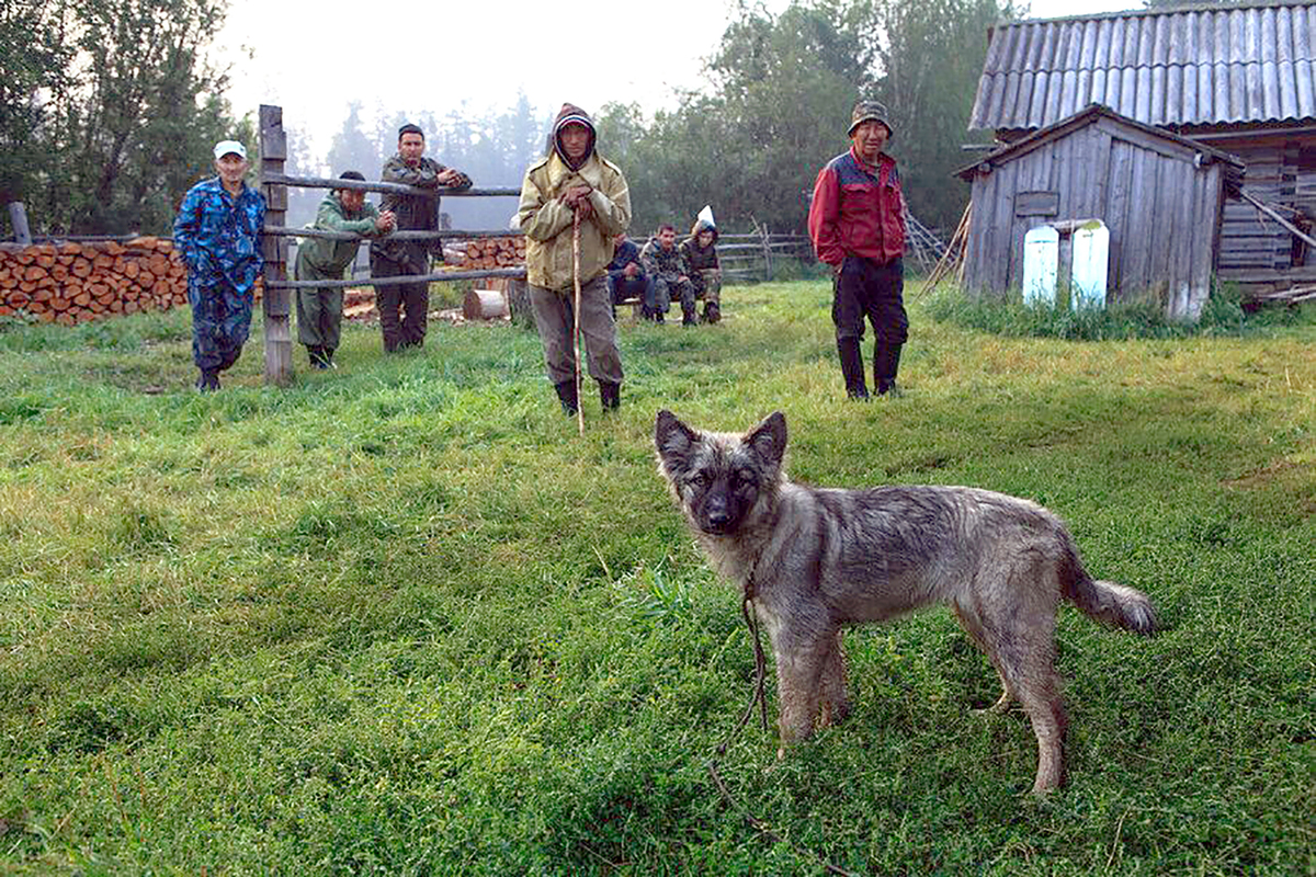 Hero puppy saves girl in Siberian taiga