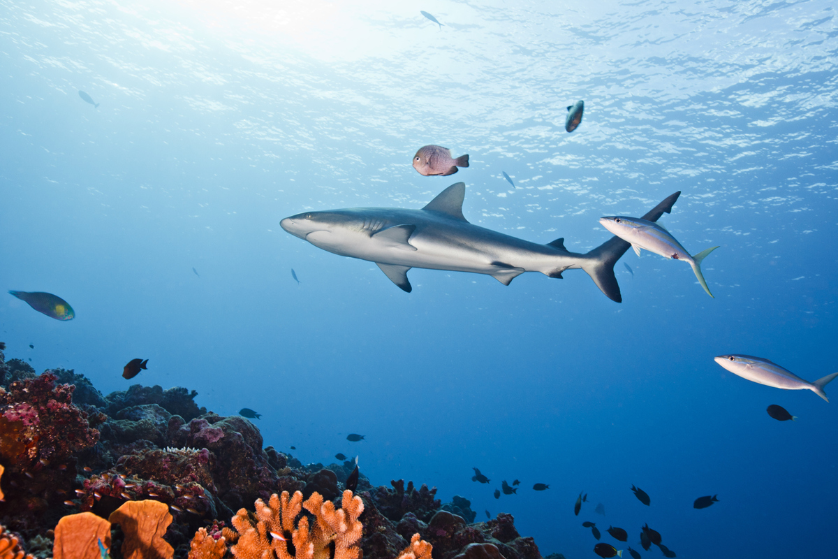 The world's first shark sanctuary is rich in underwater animals. Palau's water is also warm and clear. It's not for nothing t