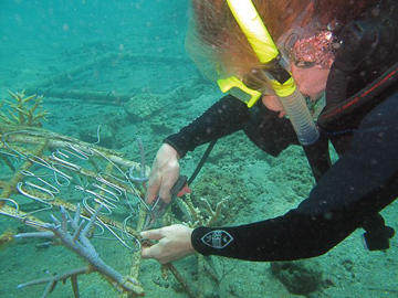 """Colleen Flanigan attaches names to a coral nursery for the """"sponsor a baby coral program,"""" in Pemuteran, Bali, 2009."""