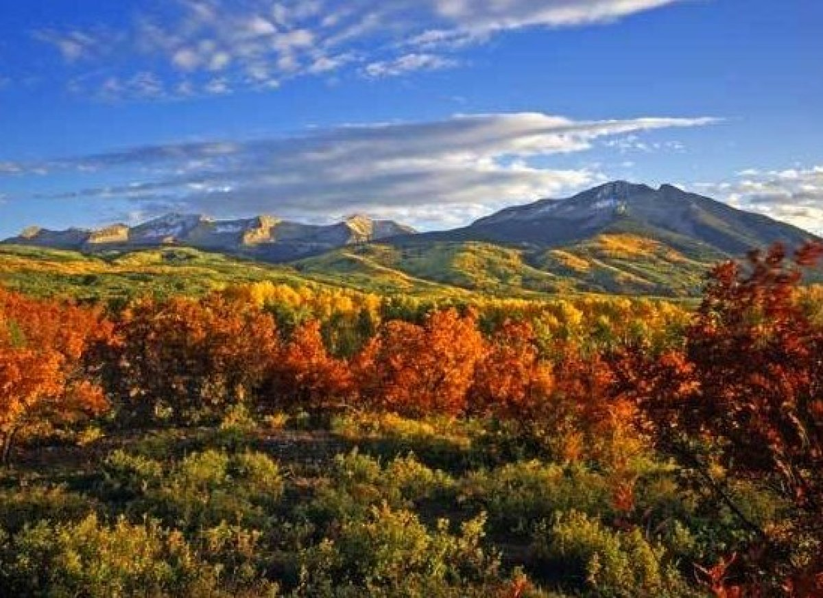 <em>Photo Credit: Courtesy of Mike Norton/Shutterstock</em>  When a world-famous town is named after a tree, you know it's