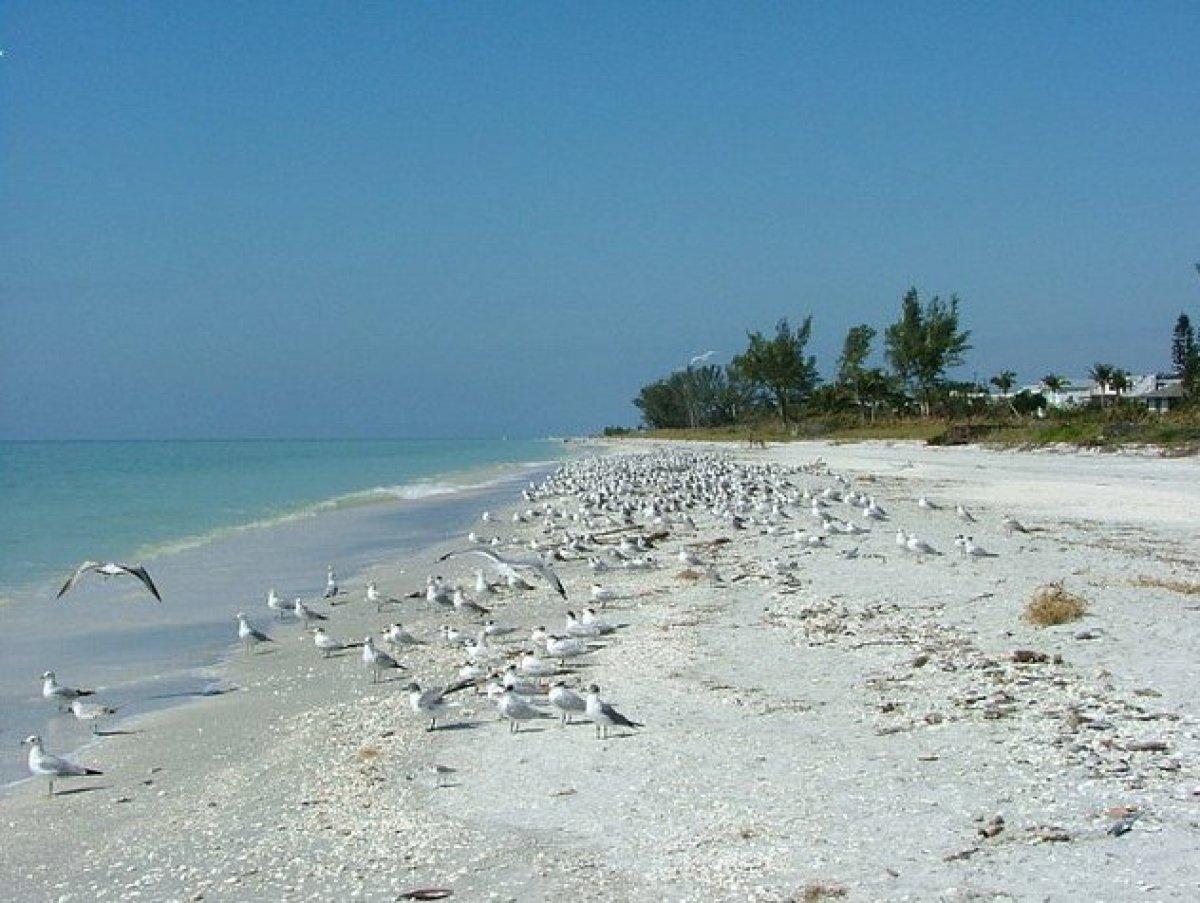 Horseshoe Beach Florida Marina