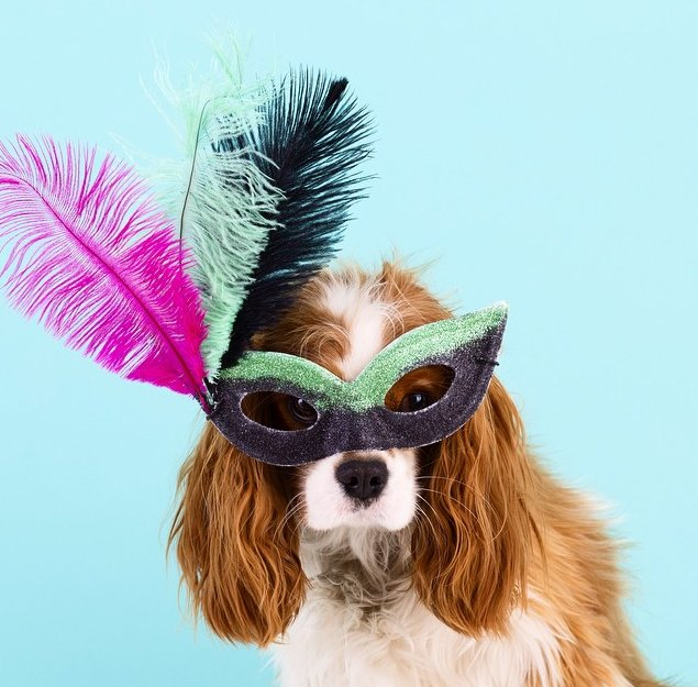 25 Pet Halloween Costumes That Are So Cute We Can\'t Even | HuffPost