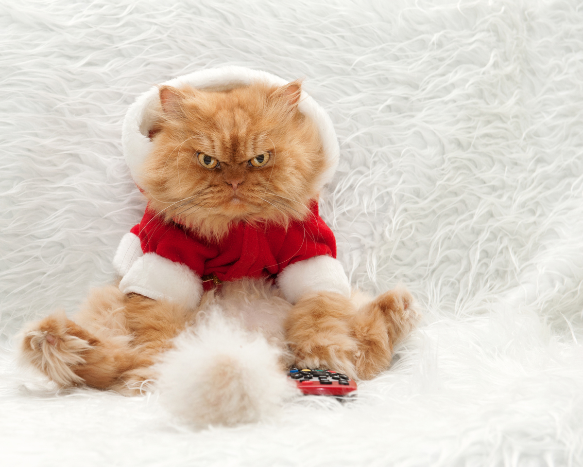 Meet Garfi The Angriest Cat On The Internet HuffPost - Garfi is officially the worlds angriest cat