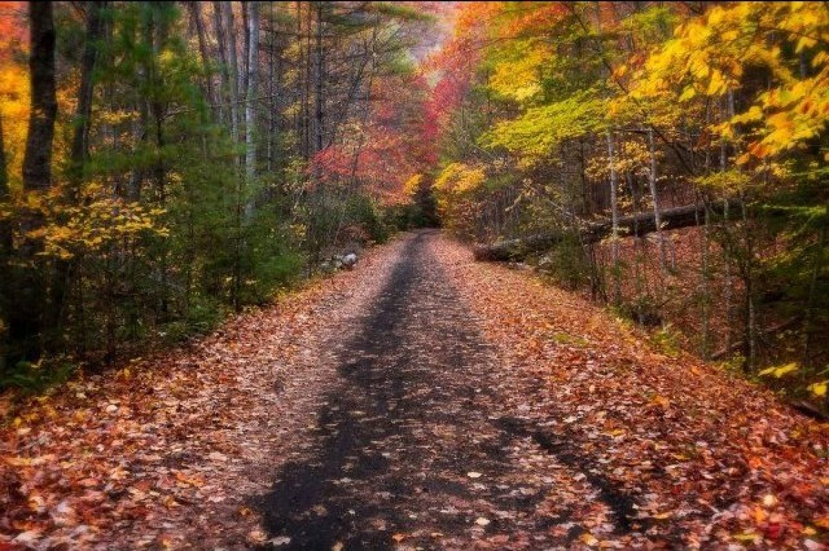 """Creep along the <a href=""""http://www.vacreepertrail.org/"""" target=""""_hplink"""">Virginia Creeper Trailer</a> to do some incredible"""