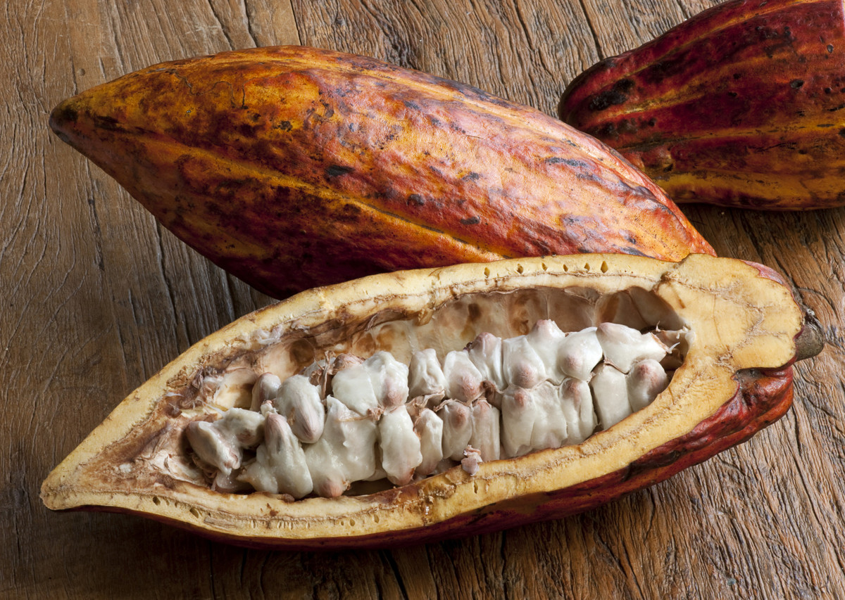 Most people are familiar with cocoa beans, but did you know they live in a large, fleshy fruit? The fruit is roughly the size