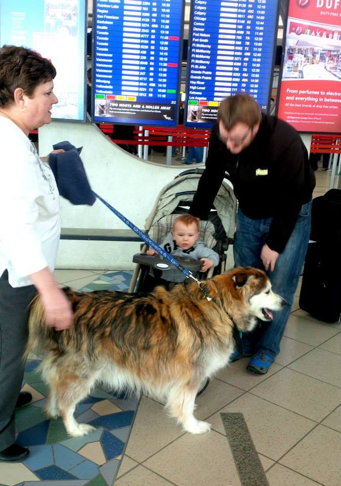 "The Edmonton International airport has brought in dogs to help<a href=""http://www.huffingtonpost.ca/2014/10/28/edmonton-airpo"