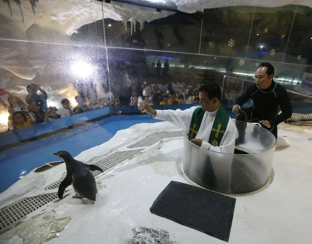 "A four-month-old Humboldt penguin named ""Kaya"" is blessed by a Catholic priest prior to its first swim Wednesday, Oct. 29, 20"