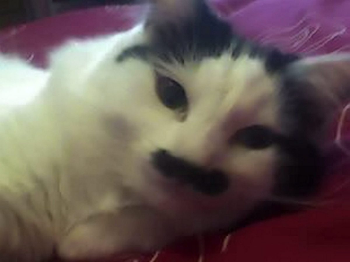 """Baz the cat before being attacked for """"looking like Hitler""""."""