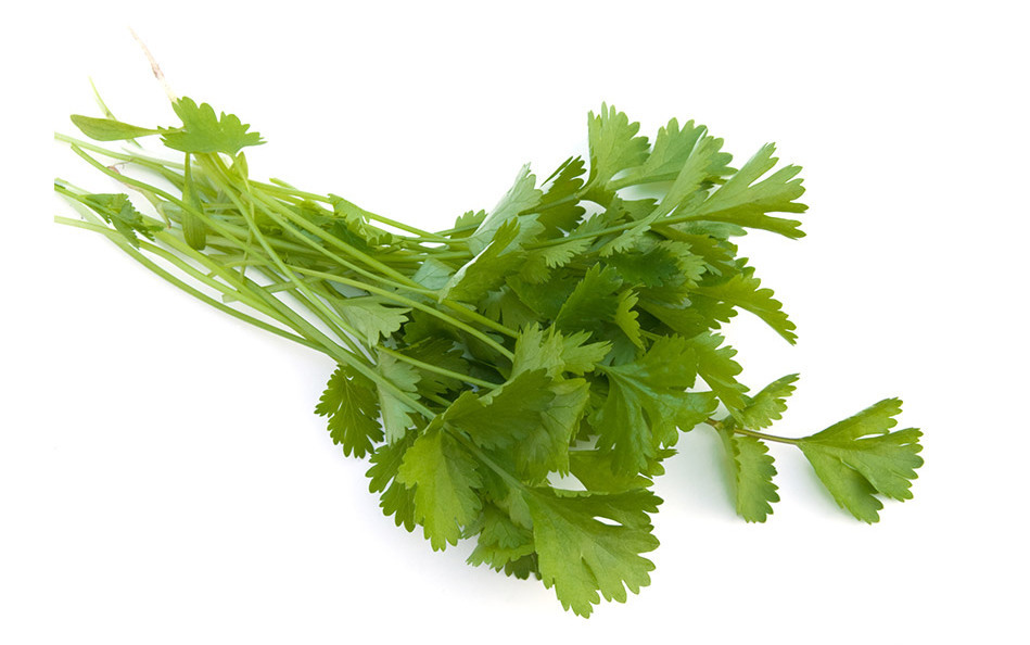 I love the stuff, but my daughter Daphne hates it. And she's not alone. Among roughly 1,100 people who tried cilantro, almost