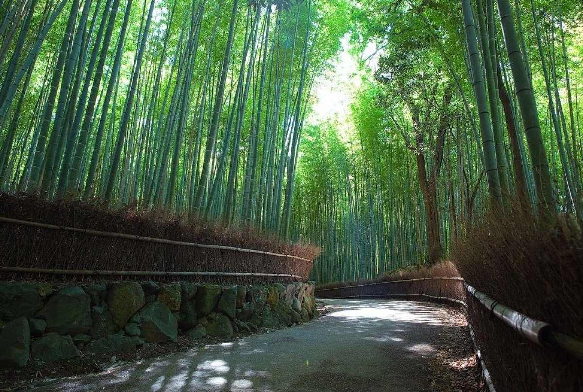 "This bamboo forest is greener than green, and I've got to see it in person. The <a href=""https://www.flickr.com/photos/331993"