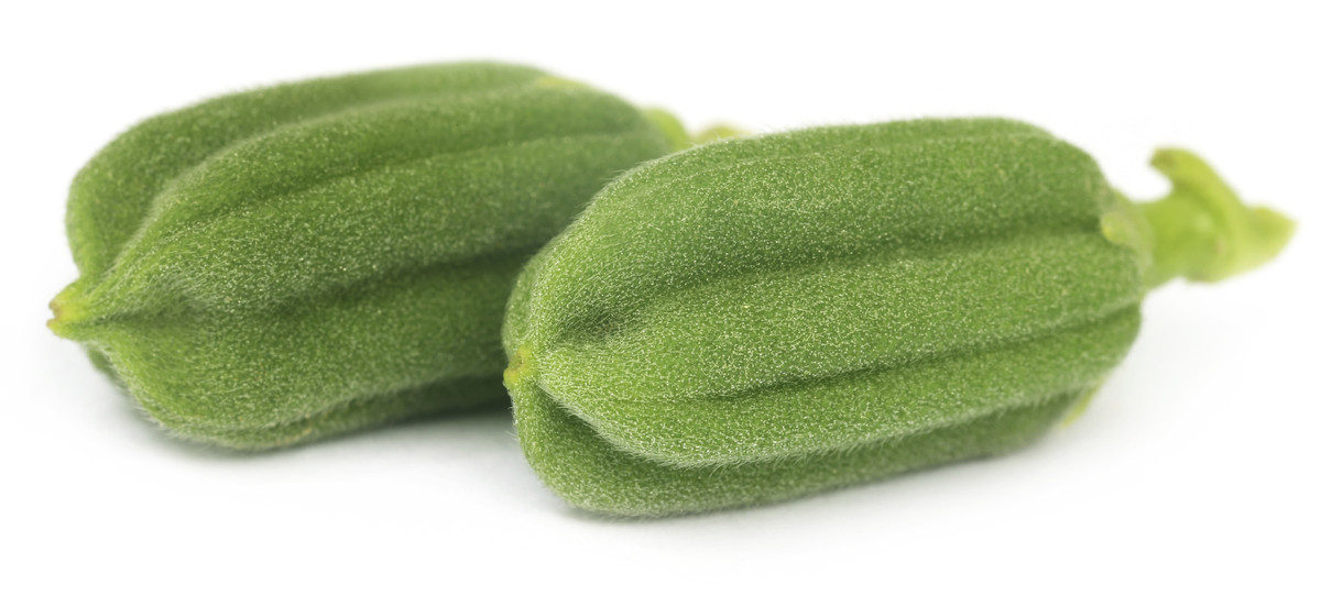 """The fruit is a long pod that looks sort of like okra, and grows on the <a href=""""http://www.britannica.com/EBchecked/topic/536"""