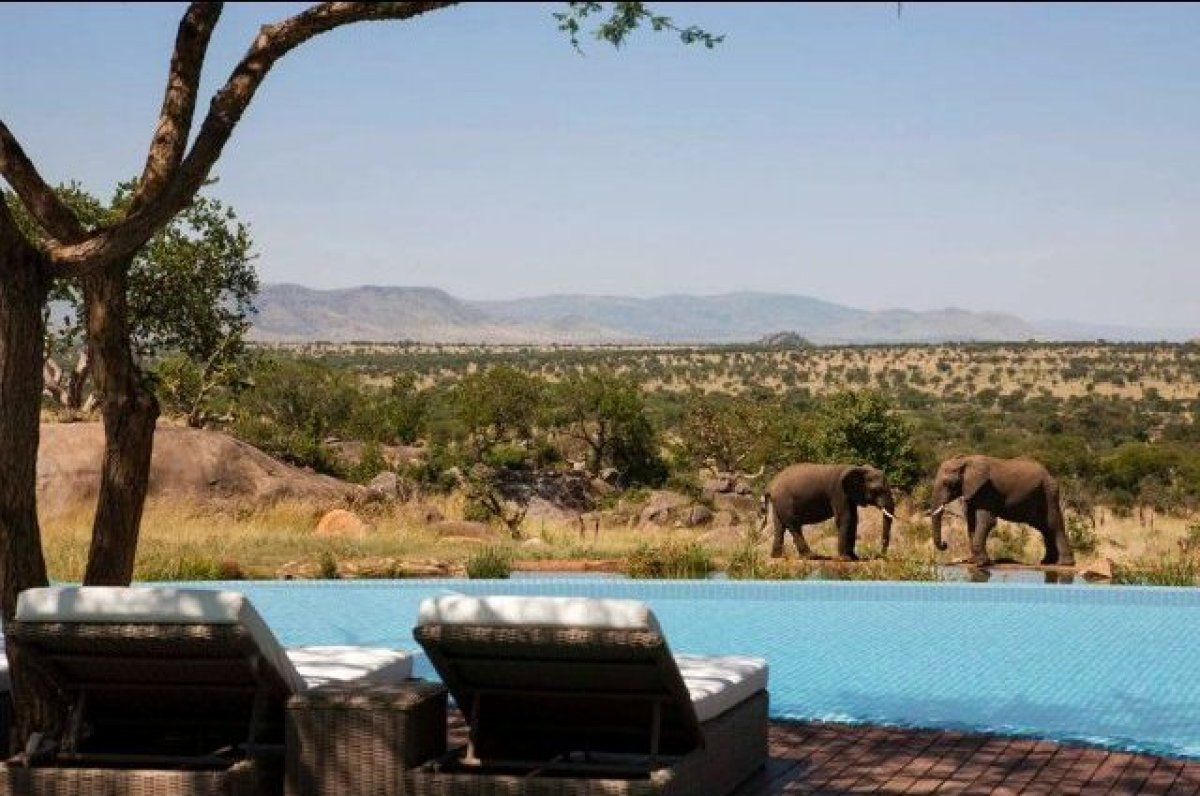 """The term """"safari"""" conjures images of jeeps and jungles, but you won't need to trek far from this hotel to see wildlife up clo"""
