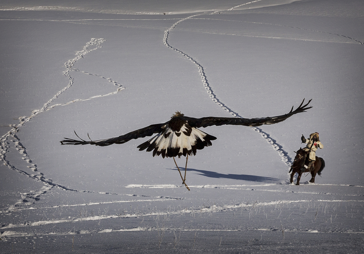 A Chinese Kazakh eagle hunter hunts with his eagle during a local competition in the mountains of Qinghe County, China, on Ja