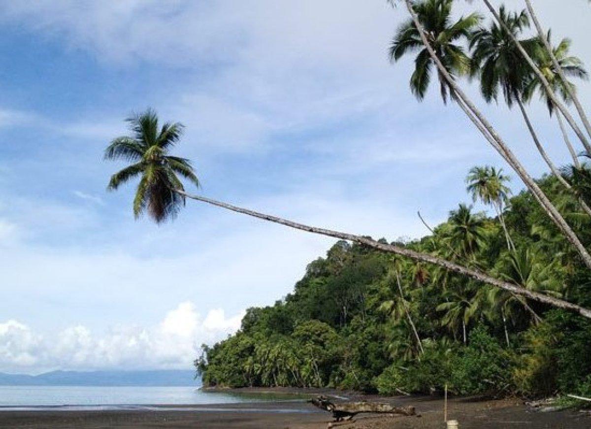 <em>Photo Credit: Courtesy of The Osa Wildlife Sanctuary</em>  Where: Puerto Jimenez, Costa Rica  We stayed with Carol an