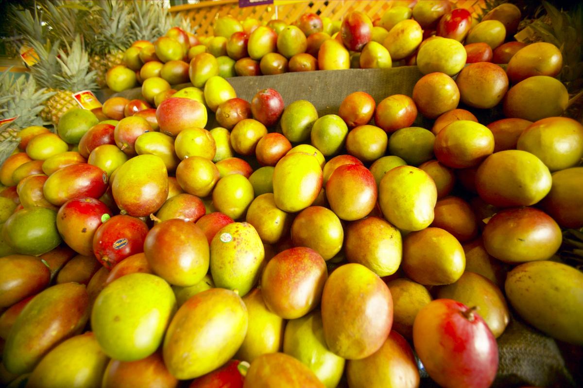 100 grapple fruit tree dwarf apples dwarf fruit trees from