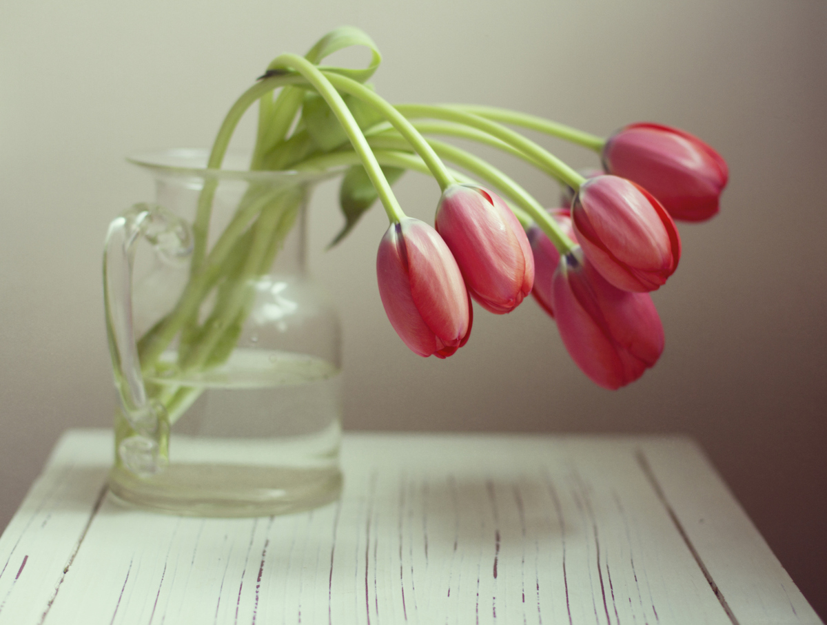 How To Keep Tulips Alive In 3 Simple Steps | HuffPost