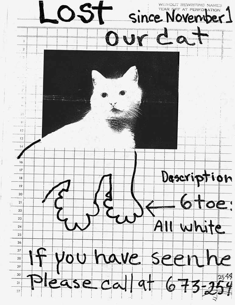 Examining The All Too Overlooked Art Of The Lost Pet Poster HuffPost - Missing cat gets found next to his own missing cat poster