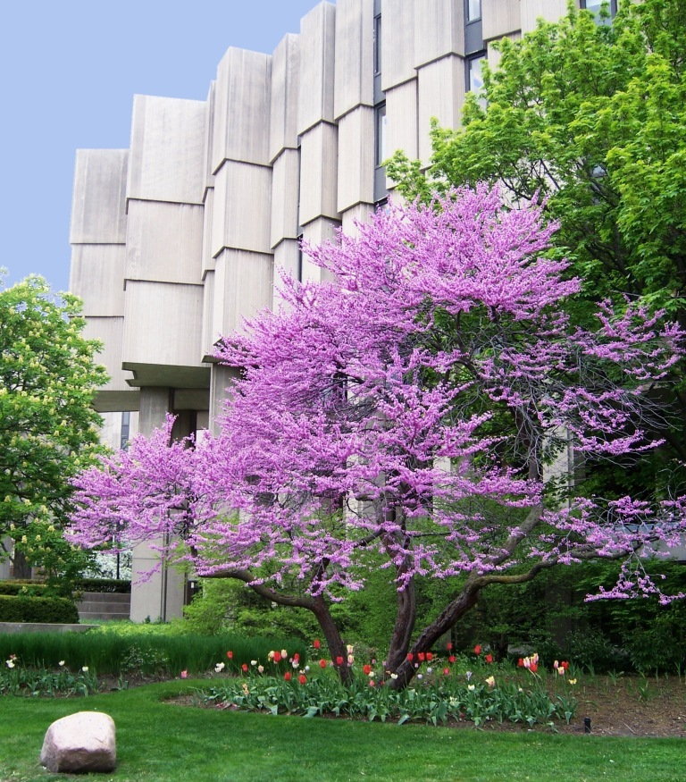 Orders from Northwestern University students increase 11% during finals week compared to the rest of the term.