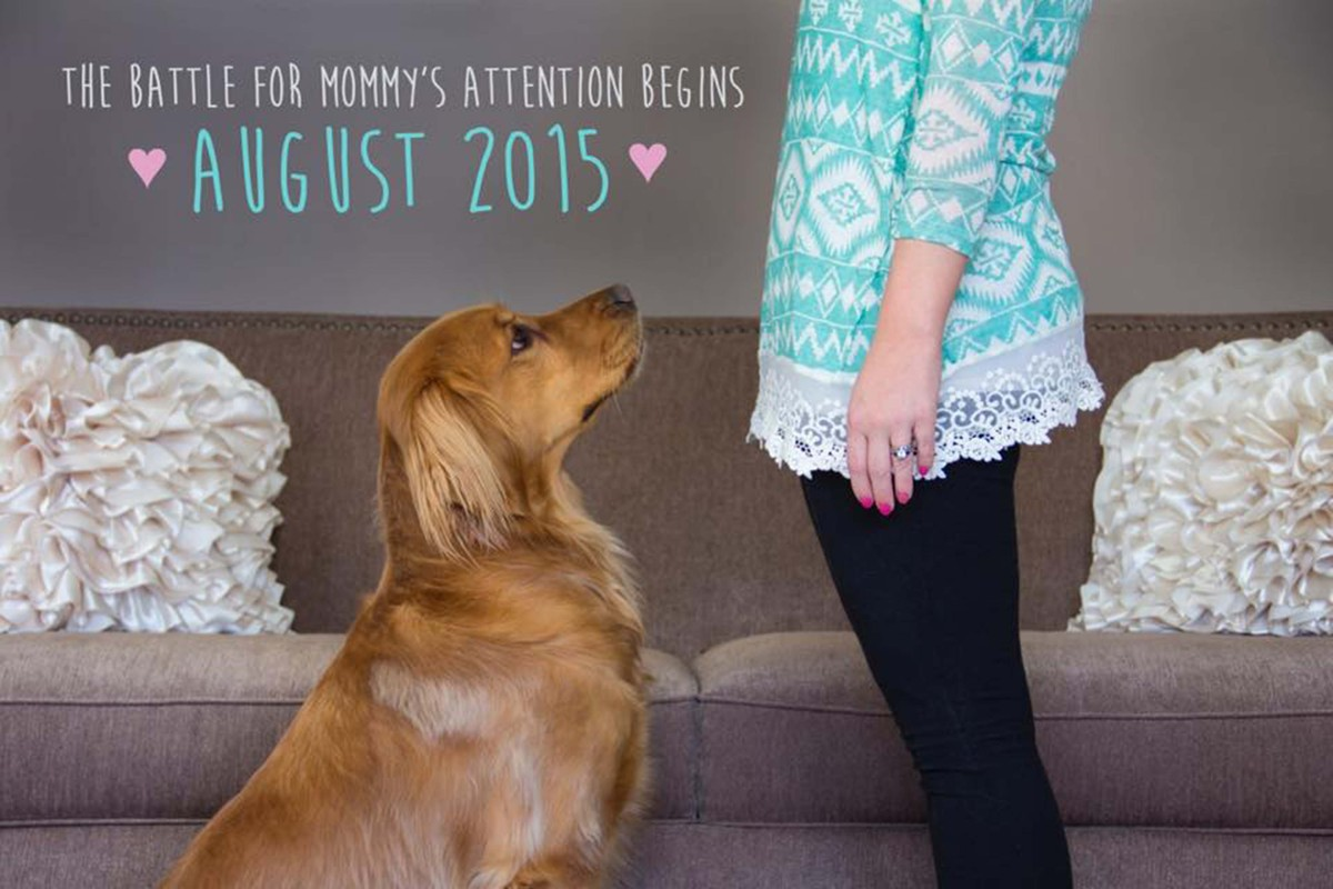 50 Adorable Dogs Who Shared Their Familys Pregnancy News In The – Birth Announcement with Dog